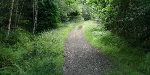 Glenart Wood Walk