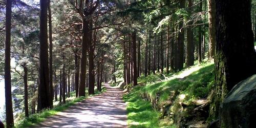 Glendalough Miners Road Walk (Purple Route)