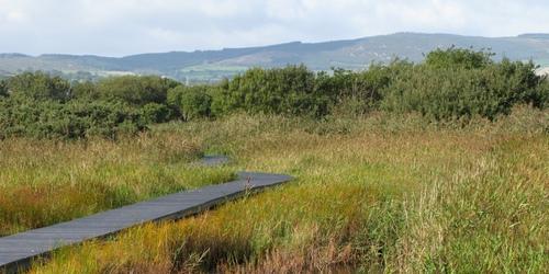 East Coast Wetlands & Nature Reserve