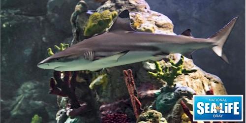 National Aquarium Sealife Centre Bray