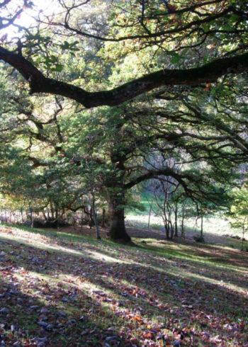 Wren's Wood Garden
