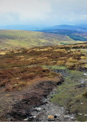 Top Trails in Wicklow